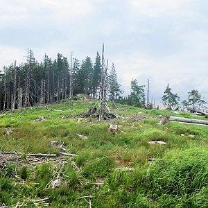 Dřevěná hůl