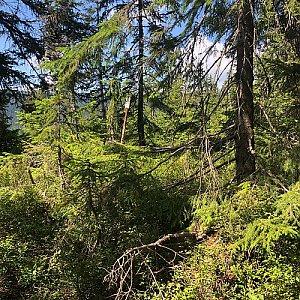 Lesní hora