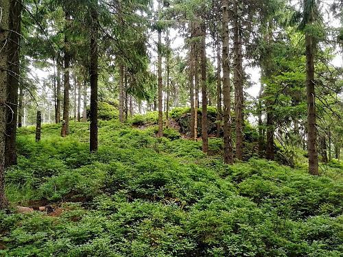 Preislerův kopec