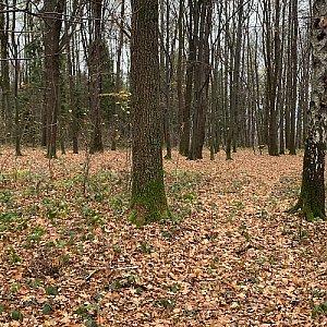 Místecký les