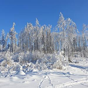 Kozlovická hora V vrchol
