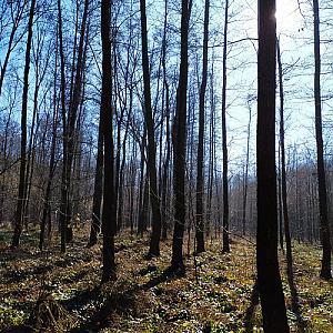 Bartovický les