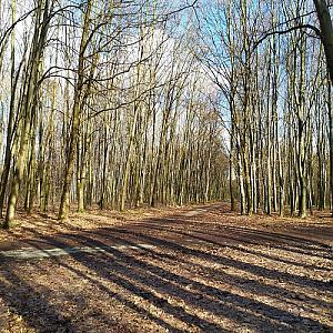 Pežgovský les JV vrchol