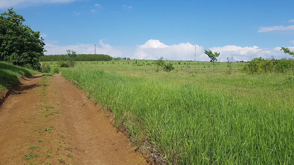 Dealul Bălănești