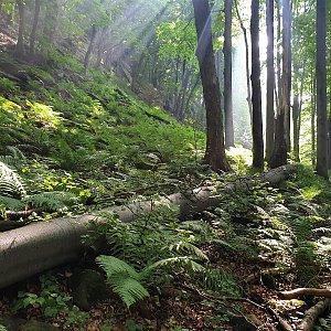Skalka  - Stanovec - Suché úbočí