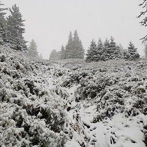 Okolo Pradědu v prvním sněhu