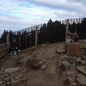 Joch a Dingo na vrcholu Lysá hora (18.11.2018 12:25)