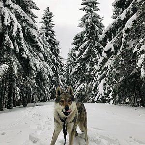 Veronika Tvrdoňová na vrcholu Tanečnice (14.2.2020 14:30)