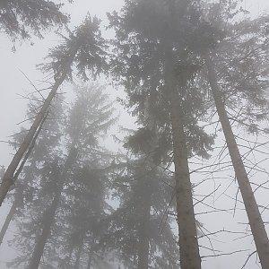 Folle na vrcholu Prašivá (23.3.2021 16:05)