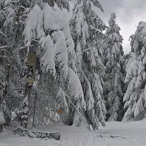 karina gasova na vrcholu Tanečnice - sedlo (18.1.2019 10:24)