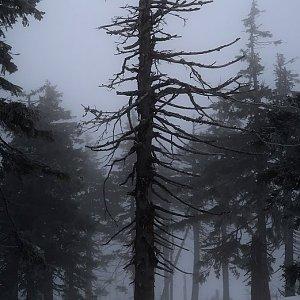 Bouřka na vrcholu Stříbrnická (17.1.2020 13:55)
