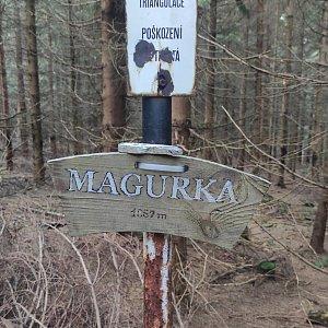 Miros na vrcholu Magurka (5.9.2021 8:05)