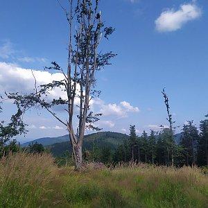 ŠenovKK na vrcholu Kotař - Salaš (21.7.2021 16:16)