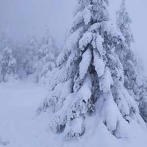 ŠenovKK na vrcholu Velký Klínovec (21.1.2021 13:27)