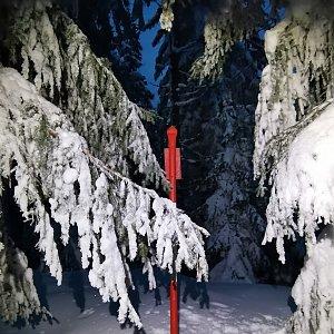 Šárka na vrcholu Kobylanka (21.1.2021 17:01)