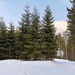 Šárka na vrcholu Kobylanka (25.4.2021 16:47)