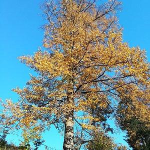 Jana Konečná na vrcholu Kabátice (13.10.2018 9:05)