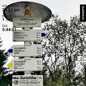 Medvěd Codiak na vrcholu Javorový vrch (19.10.2020 14:20)