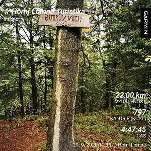 Medvěd Codiak na vrcholu Burkův vrch (29.9.2020 13:25)