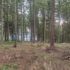 Miros na vrcholu Bukovina (25.7.2021 6:57)