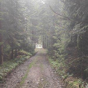 Miros na vrcholu Bukovina (28.8.2021 9:37)