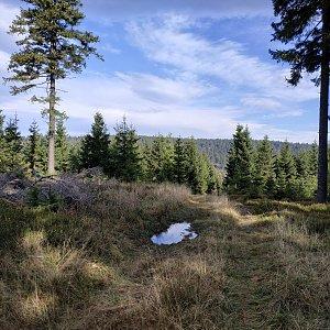 krupjan na vrcholu Trnová hora (15.10.2019 10:40)