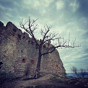 koc256 na vrcholu Dívčí hrad (Děvičky) (1.3.2020 10:32)