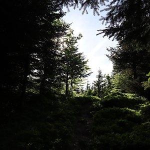 Manjula na vrcholu Lví hora (9.6.2021 15:38)