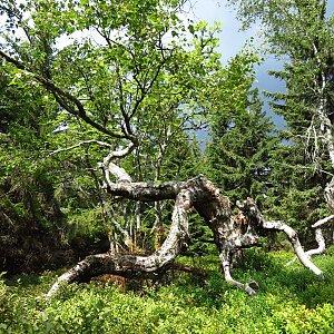 Iveta Válová na vrcholu Dvorský les (2.8.2019 11:22)