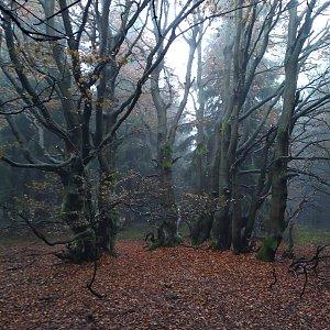 Eliška na vrcholu Dvorský les (17.11.2020 13:30)
