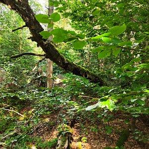Vendy na vrcholu Dvorský les (12.8.2021 11:33)
