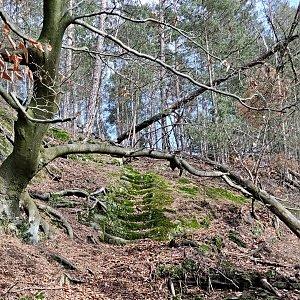 Pavel Martínek na vrcholu Široký kámen (8.2.2020 13:07)