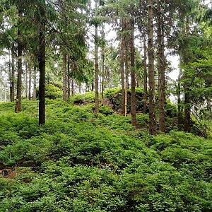 Vladimír Grančay na vrcholu Preislerův kopec (6.7.2019 19:06)