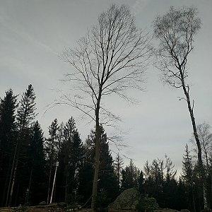 Anna na vrcholu Orlík (16.2.2020 7:42)