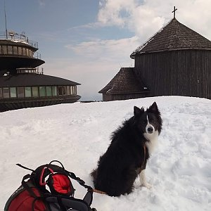 Dolfa na vrcholu Sněžka / Śnieżka (20.4.2021 11:30)