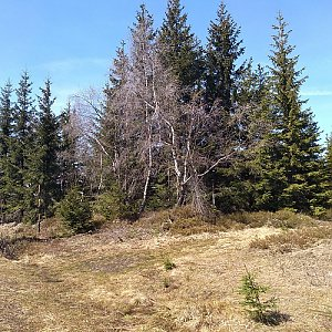 Eliška na vrcholu Jelení vrch (9.5.2021 14:50)