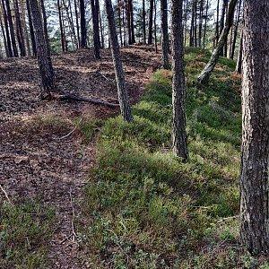 Pavel Martínek na vrcholu Kyselinčí kopec (16.3.2020 14:34)