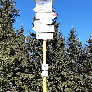 Arni na vrcholu Malý Javorník (3.9.2020 13:05)