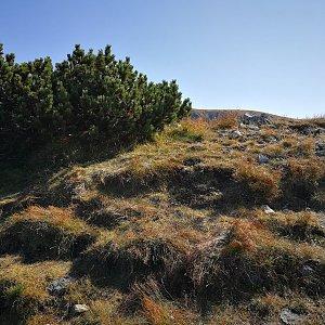 Pepino na vrcholu Zuberec (15.9.2020 14:16)