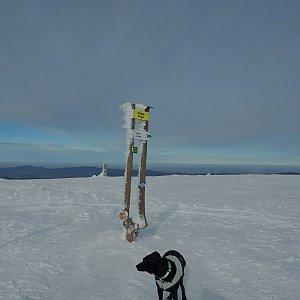 Manjula na vrcholu Králický Sněžník (23.2.2019 14:23)
