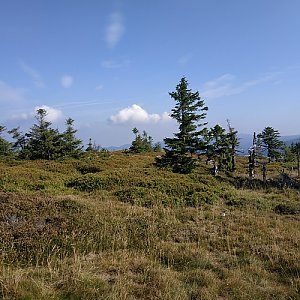krupjan na vrcholu Břidličná (29.8.2019 9:39)