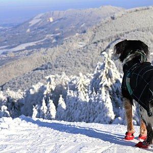 Čaky na vrcholu Radegast - Z vrchol I (18.1.2021 12:05)