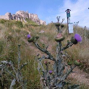 filipka na vrcholu Spišský hradní vrch (10.7.2021 10:19)