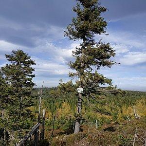 krupjan na vrcholu Brousek (15.10.2019 12:44)