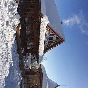 Ivča na vrcholu Skalka (Ondřejník) (23.1.2019 10:13)