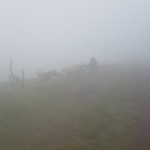 michal čech na vrcholu Midžur (9.7.2018 10:31)