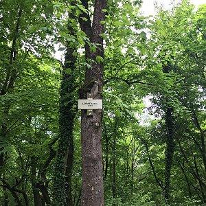 Ivetast na vrcholu Lopata (5.6.2021 10:39)